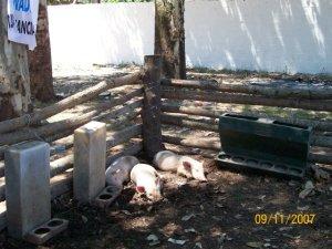 """Nuestra """"Producción de Cerdos"""", Alternancia Nº 2"""
